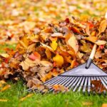 Autumn Lawn Care Steps for Great Spring Growth